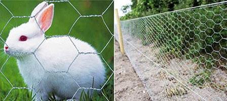 Rabbit Fence