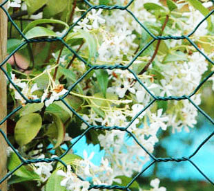 Hexagonal Wire Netting-Hexagonal Fences